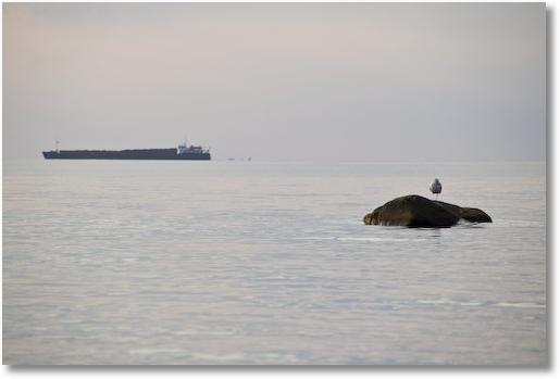 Tanker und Vogel