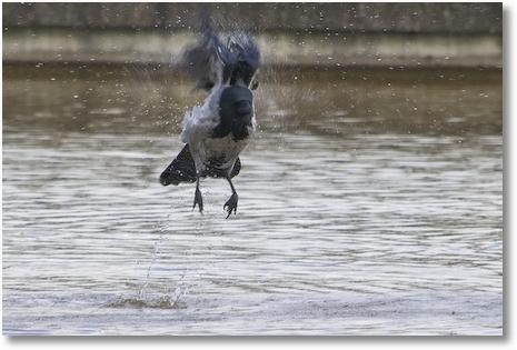 Vogel badend